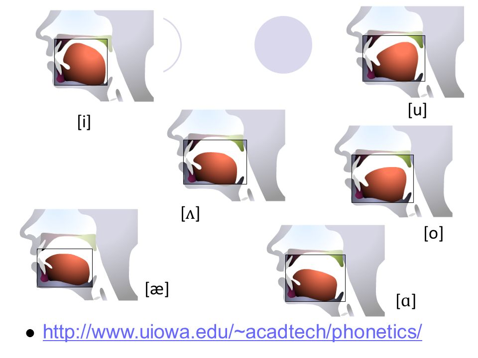 http://www.uiowa.edu/~acadtech/phonetics/ [u] [i] [ʌ] [o] [æ] [ɑ]